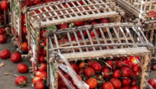 Red produce spilling out of a basket