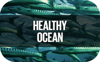https://sdghelpdesk.unescap.org/knowledge-hub/thematic-area/healthy-oceans