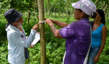 Women monitor the progress of the forest restoration